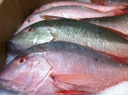 mutton snappers